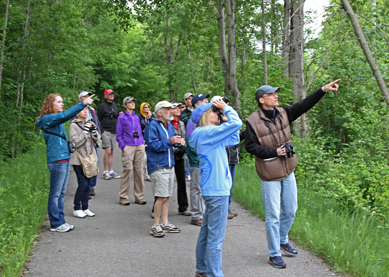 Four Simple Steps to Begin Birding WorldBirder