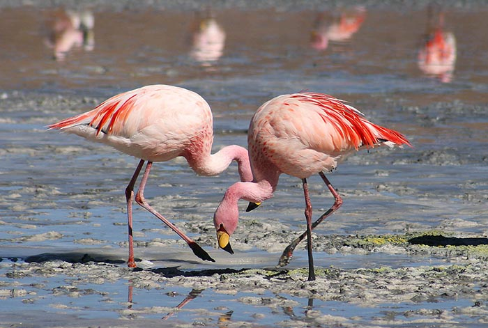 The World's Top Ten Most Expensive Birds Flamingo WorldBirder