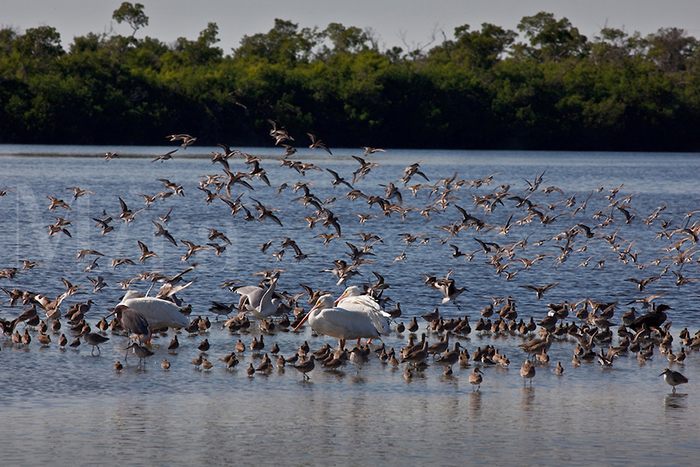 Top 15 Birding Destinations in the United States & Canada Florida - J.N. Ding Darling National Wildlife Refuge WorldBirder