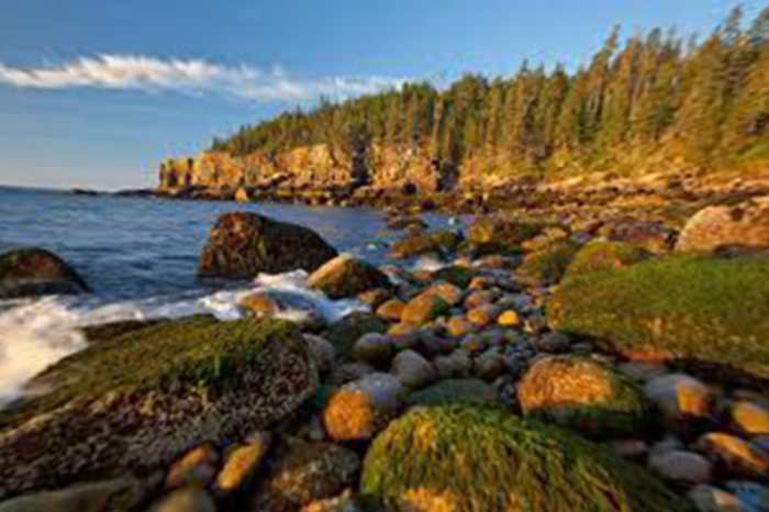 Top 15 Birding Destinations in the United States & Canada Maine - Acadia National Park WorldBirder