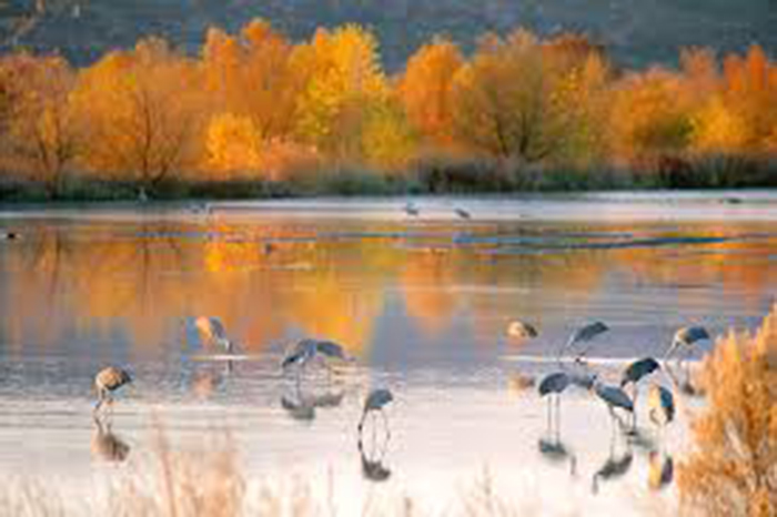 Top 15 Birding Destinations in the United States & Canada New Mexico - Bosque del Apache National Wildlife Refuge WorldBirder